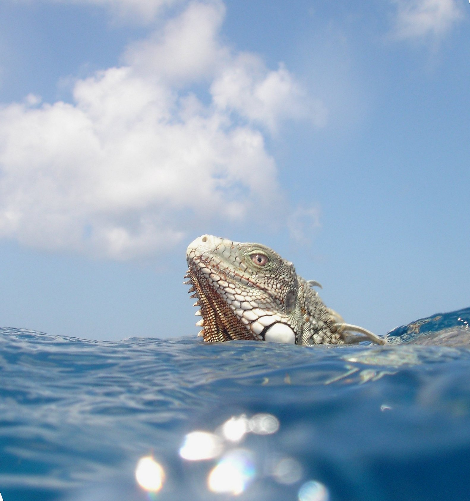 Photo by Timmmy Bonaire