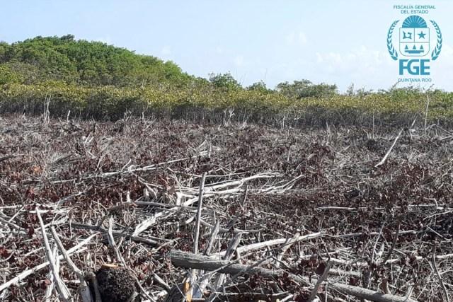 Inician investigación por daño a zona de manglar en Mahahual