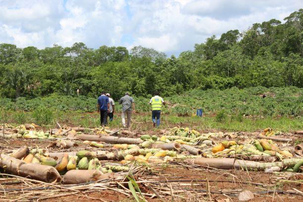 Prevén en Quintana Roo repunte en precio de varios cultivos por escasez tras recientes tormentas