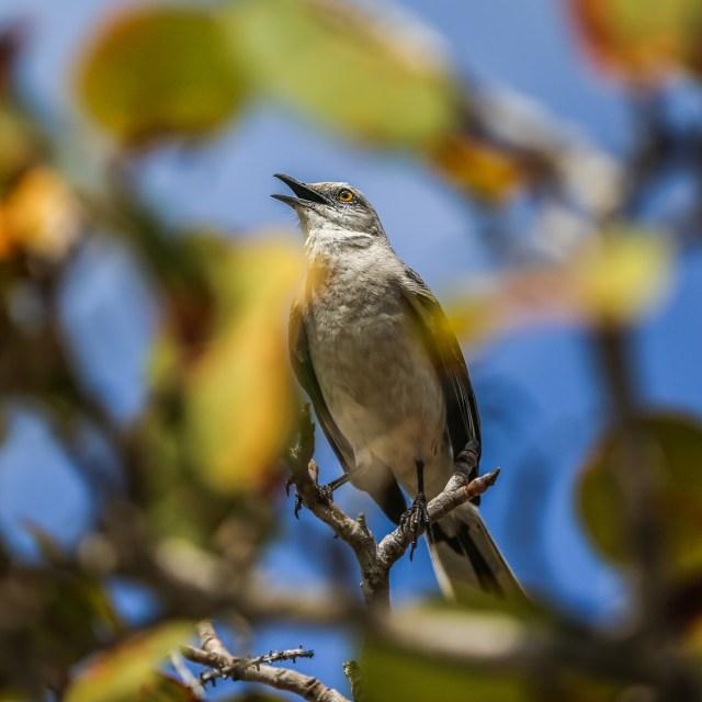 Festival de Aves en Cozumel cambiará su esquema por la COVID-19