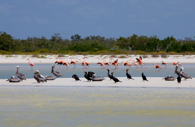 Hoteles en Quintana Roo se Desplastifícan