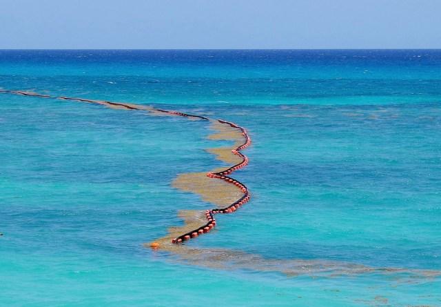 Actualizan lineamientos técnicos para gestión integral del sargazo en el Mar Caribe Mexicano y Golfo de México