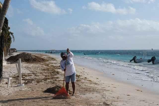Gobierno de Puerto Morelos mantiene esfuerzos para evitar acumulación de sargazo en las playas públicas
