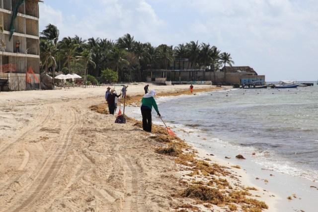 Atienden de manera permanente recale de sargazo en Playa del Carmen