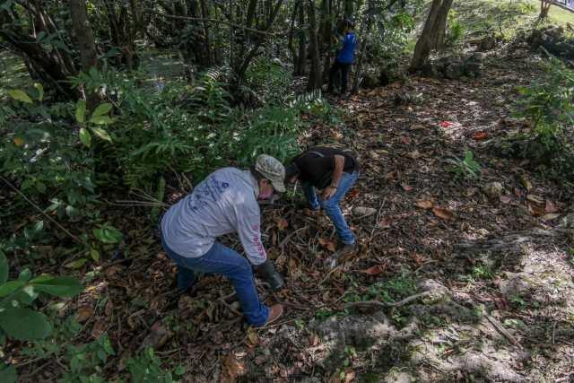 Limpian cenotes urbanos