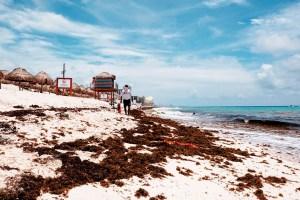 Preveen reducción de sargazo en el Caribe Mexicano