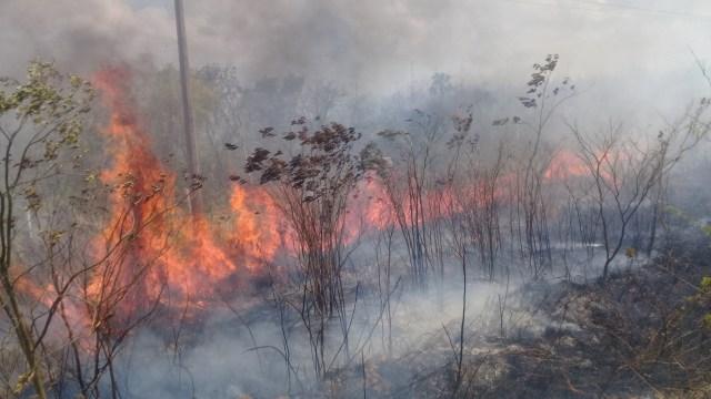 Consideran ejidatarios prioritario reforestar zonas afectadas por incendios