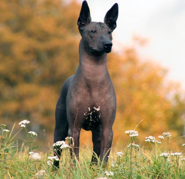 El perro incluido en la dieta de los mayas ancestrales