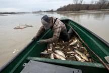 Roger Michaud rejette à l'eau les poissons d'espèces non désirées, mais toujours bien vivants.