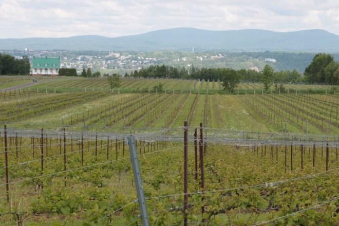 Vignoble Sainte-Petronille