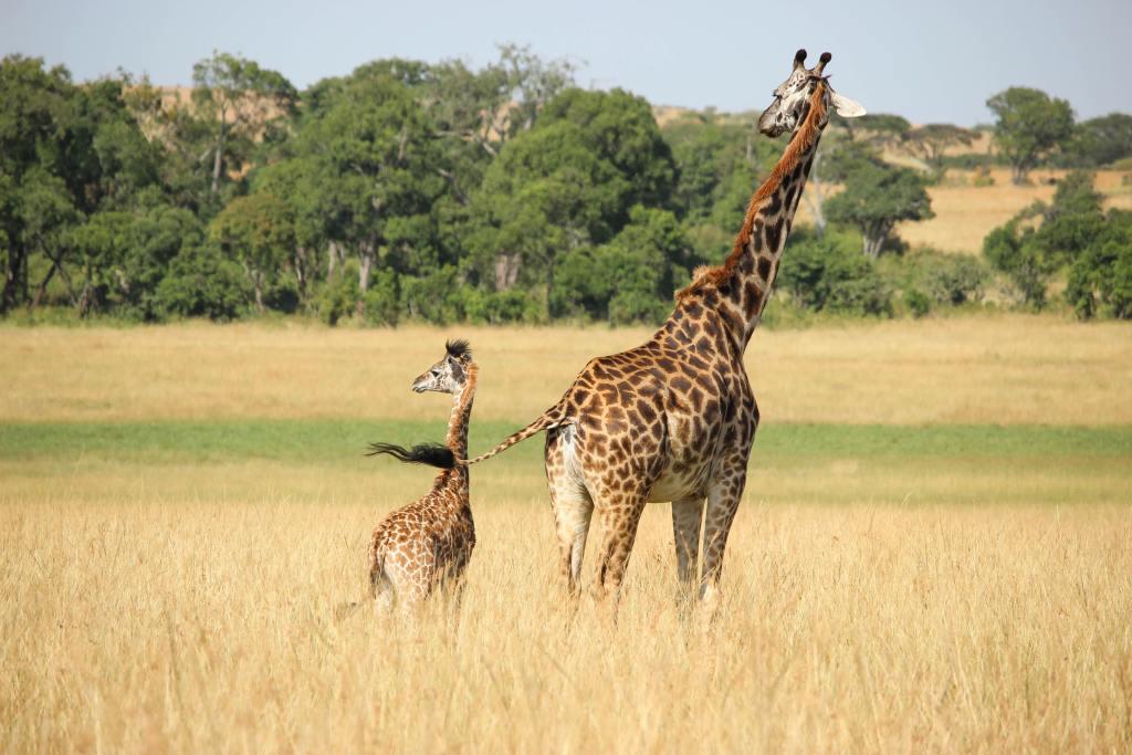 giraffe moms