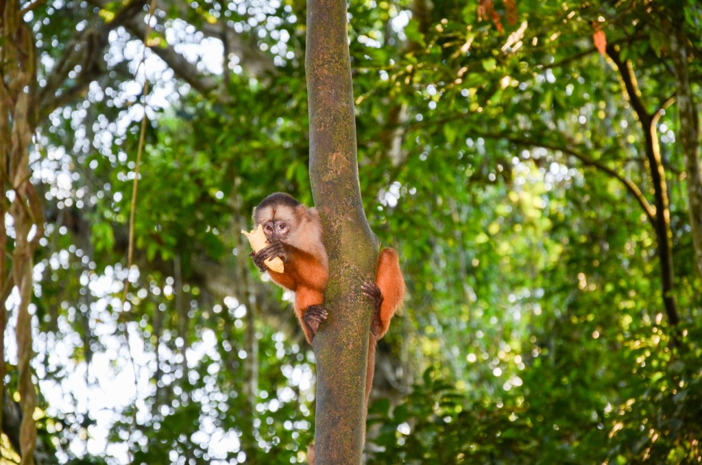 Primate food signalling depends on the situation