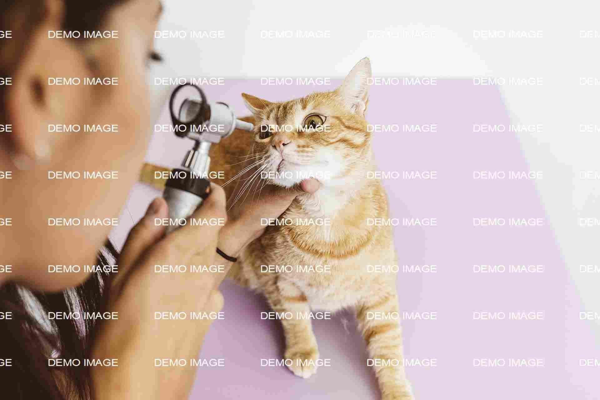 Animal Dermatology