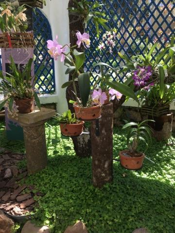 leilao de jardim botanico rj