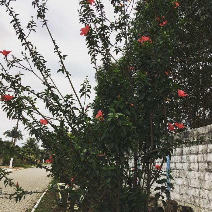 rua de flores