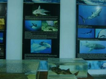 Informações sobre a fauna marinha