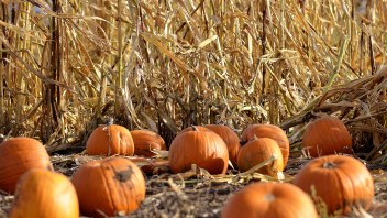 St. Anne's Pumpkin Patch