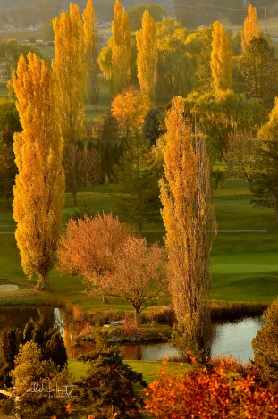 Spallumcheen Golf Course with evening sunset lighting