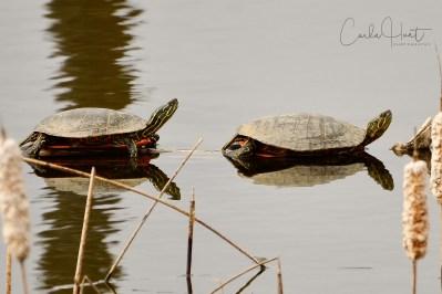 Rose's Pond, Vernon, BC