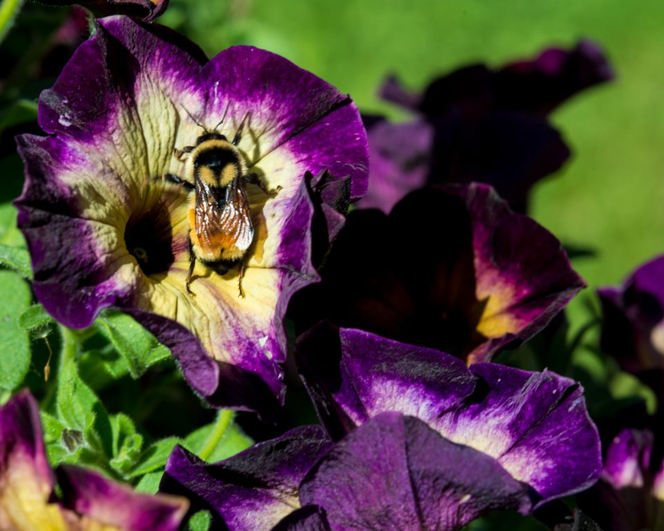 Art image, flowers, bumble bee