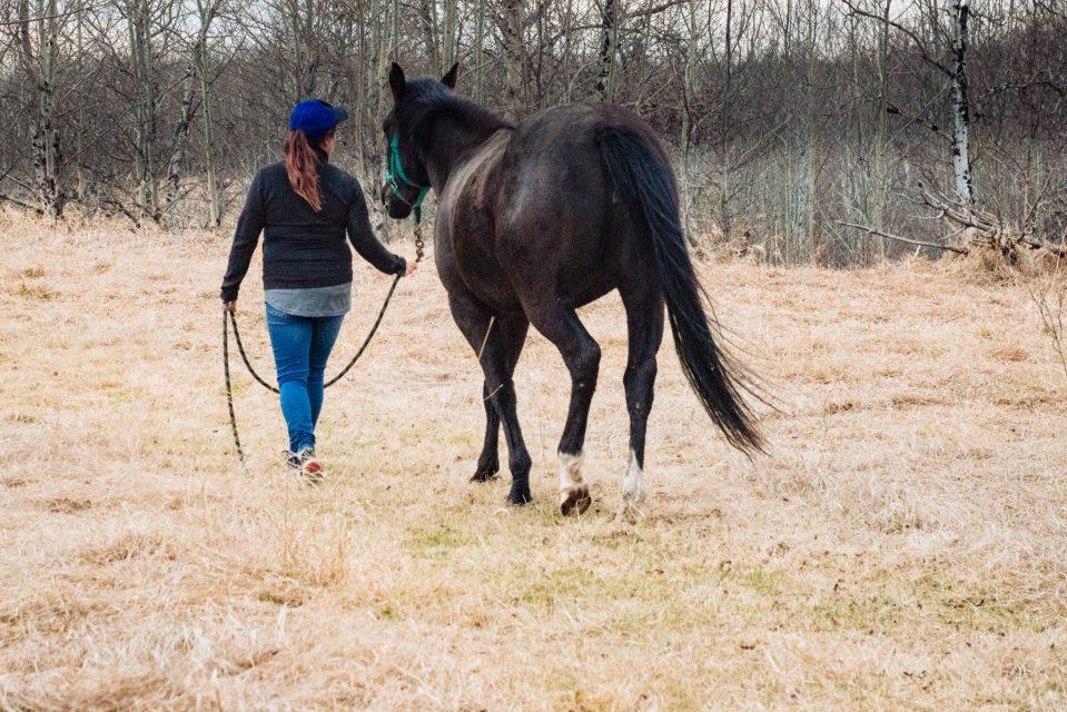 horse and owner walking in field finding peace with horses carla lehman photography equine photographer