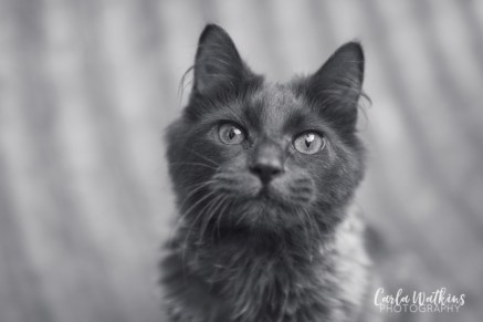 Captain Floof | pet photography by Carla Watkins Photography | carlawatkinsphotography.com