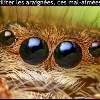 Que faut-il savoir des araignées ?