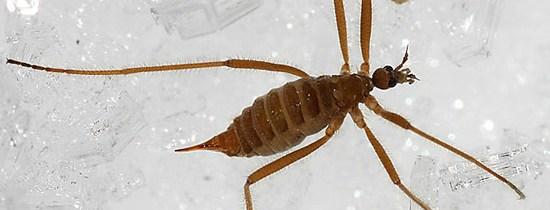 Un insecte vivant… dans le sommet enneigé du Mont Mégantic ?!?