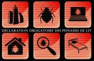 Un conseil municipal déterminant contre l'invasion des punaises de lit