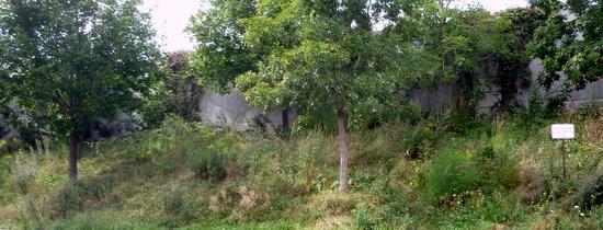 Le projet pilote de verdissement écologique sur la pente Pauline-Julien