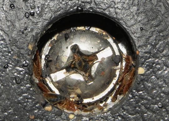 punaises de lit cachées dans un trou de vis