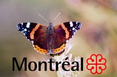 Un papillon pour Montréal