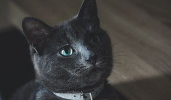 Lessons From A Scaredy-Cat