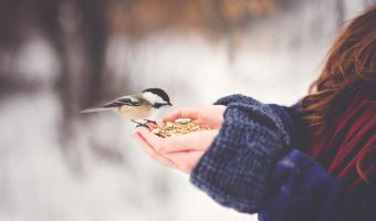 Chickadees and Spiritual Practices