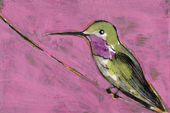 Bird Flashcard: Hummingbird on Pink
