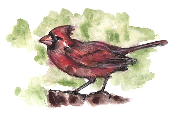 Birdwatching List: Redbird