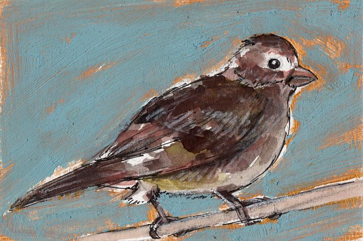 Bird Flashcard: Sparrow
