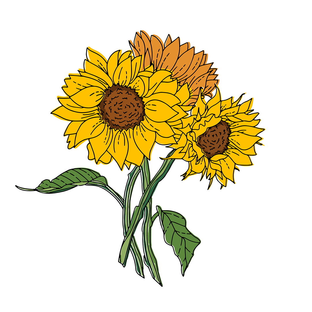 Three Illustrated Sunflowers