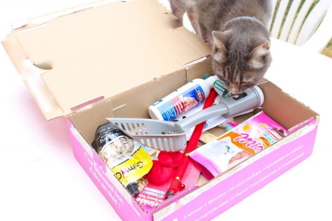 miaoubox_box