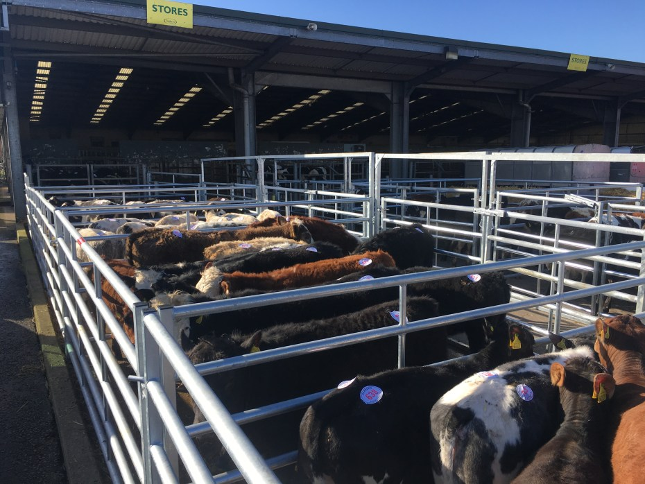The Livestock Pens In Use