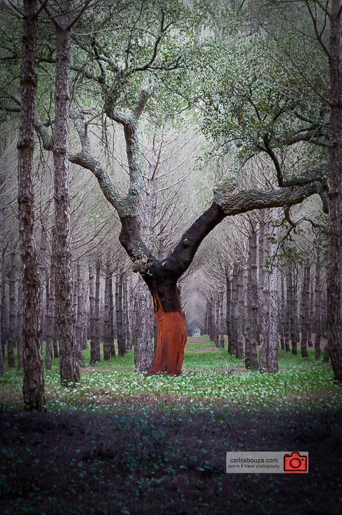 Preseleccionado para los International Garden Photographer of the Year