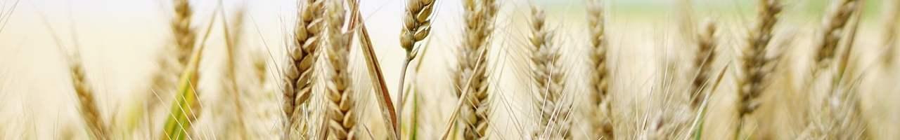 ¿Qué son las intolerancias alimentarias?