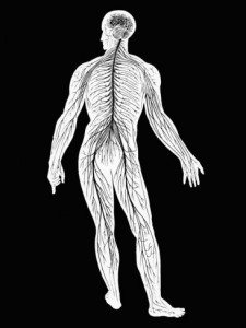 central-and-peripheral-nervous-system