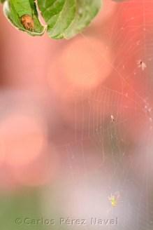 Araña y pulgón