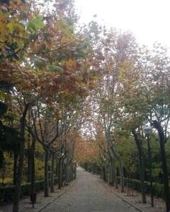 Shinrin-yoku en la Quinta de los Molinos