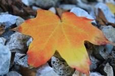Close-up image of an orange leaf fallen on rocks