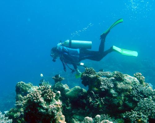 Coral Reef Recovery in Palau | Carl Safina