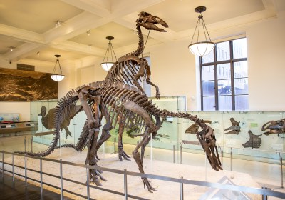 American Museum of Natural History: The 5 Halls