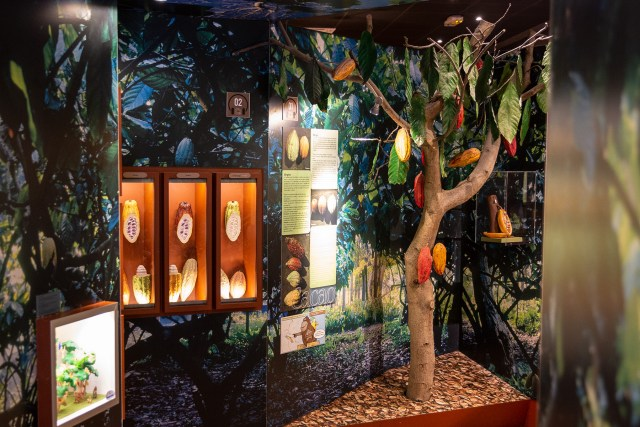Learn about the cocoa bean at Choco Story Paris Carltonaut's Travel Tips