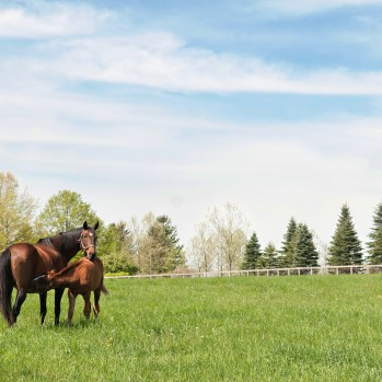 Thoroughbred Breeding Farm